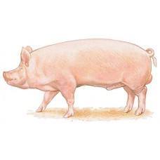 Комбикорм для свиней (цена действительна до 01.09.2019 ЗВОНИТЕ)